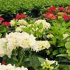 VOLCANO wspiera swą siłą wzrost kwiatów.